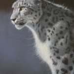 Pip McGarry lone snow leopard 2013a 24 by 18ins