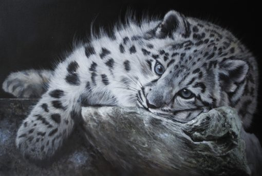 Young Snow Leopard Reclining, 30 x 20in, original painting by Pip McGarry, £15,000 at The Frame Gallery in Odiham.
