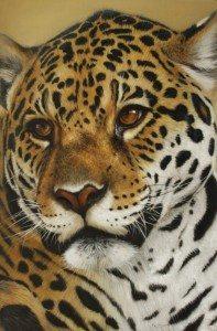 Jaguar Portrait by Pop McGarry