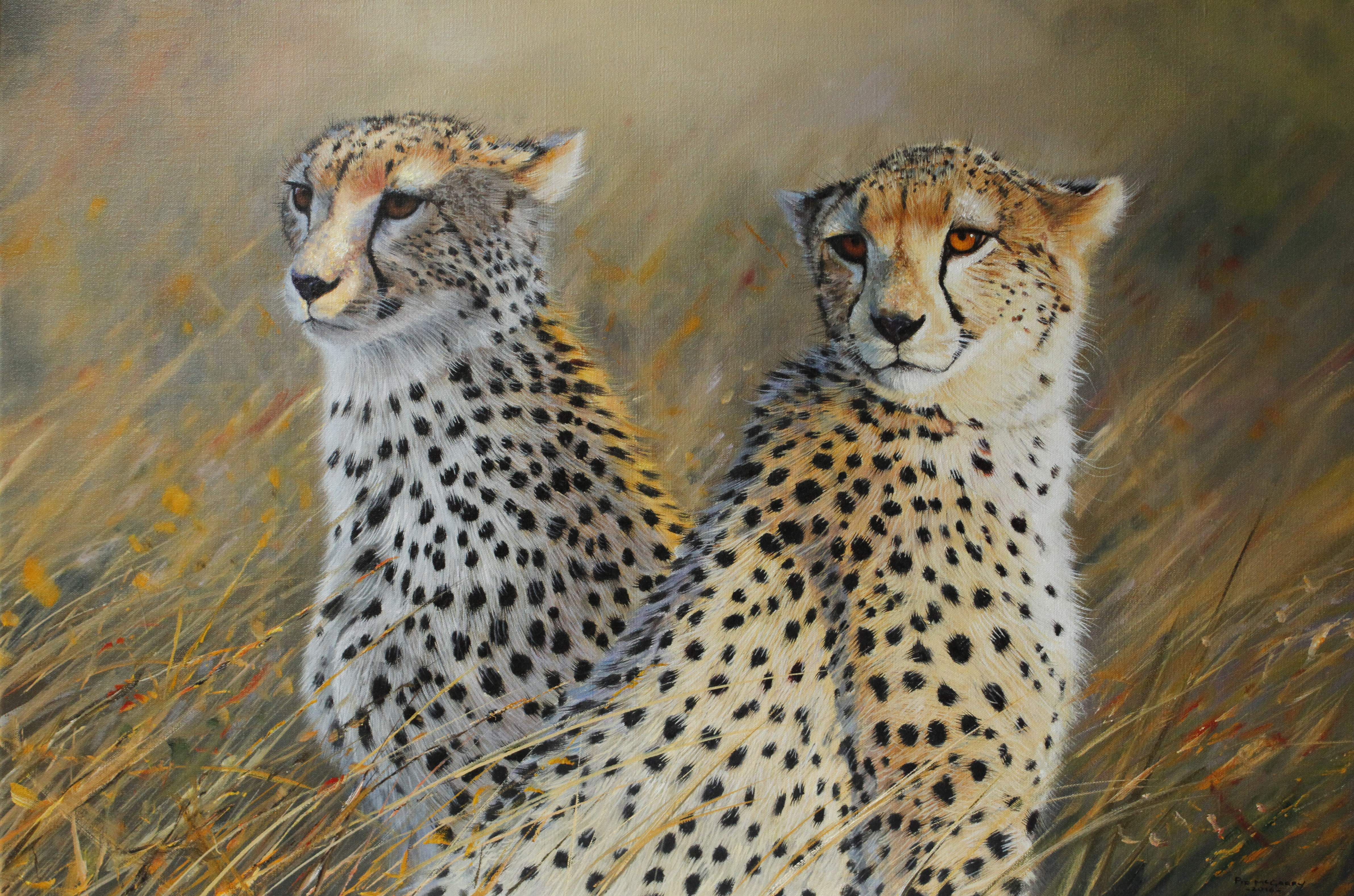 Cheetah Brothers\' – Pip McGarry | The Frame Gallery. For framing ...