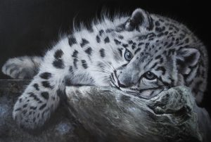 Young Snow Leopard Reclining 302 by 20ins 2017
