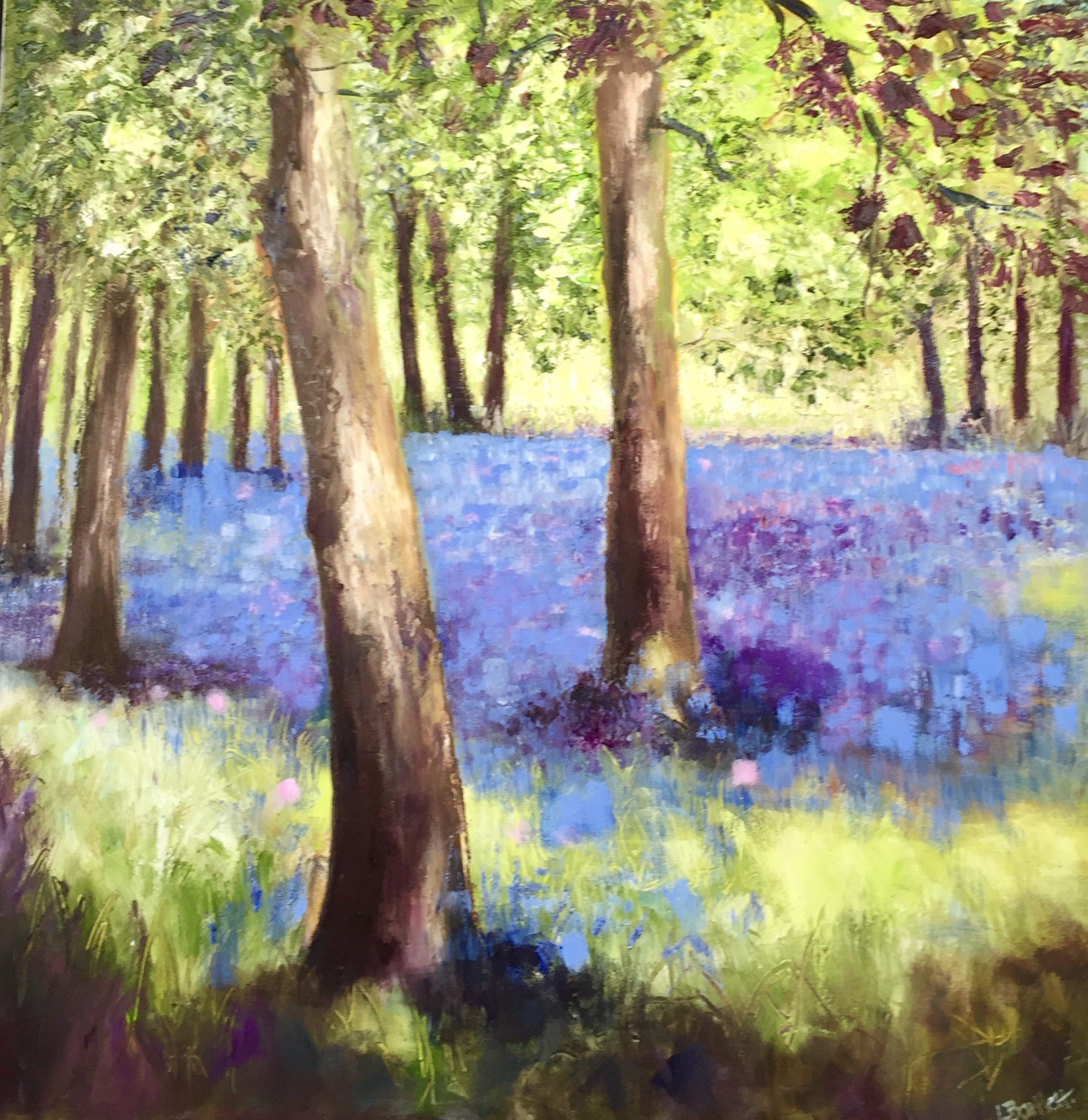 """Bluebell Drift "" 76cm x 76cm Oil on Canvas Unframed £595. Available at The Frame Gallery in Odiham."