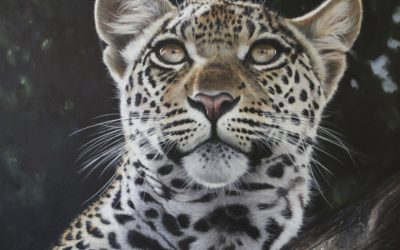 Wildlife Artist Pip McGarry Tells The Story Behind The Safari At The Frame
